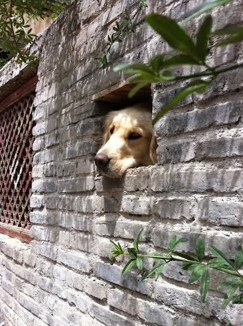 Lijiang, Yunnan, China por Chunxiao Xia