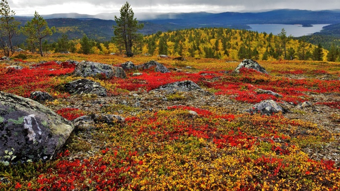 Martti Laajus_Laponia, Finlandia
