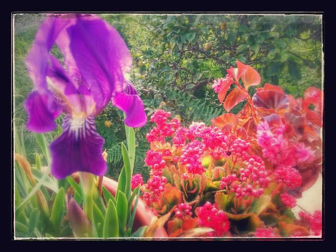 Magnus Welin -Mi propio paraiso. Mi jardín