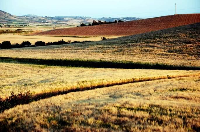 campo-de-trigo_sicilia