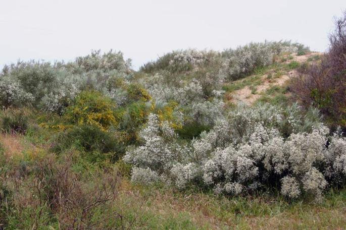 sicilia_dunas-de-arena-con-retama-blanca