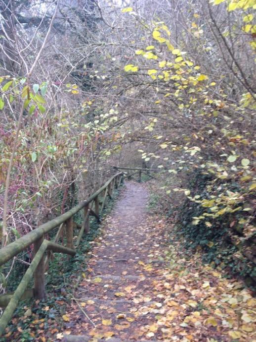 un camino en el parque